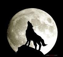 Lobo y luna llena